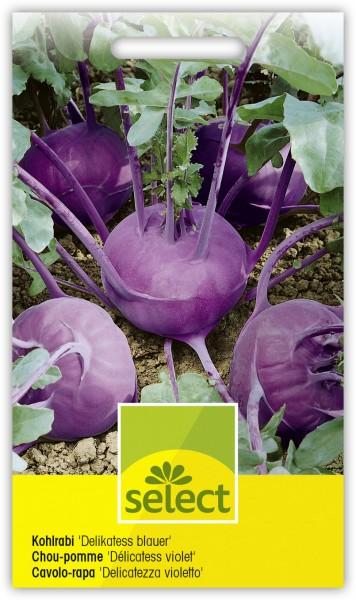 Kohlrabi 'Delikatess blauer' - Brassica oleracea L. var. gongylodes L.