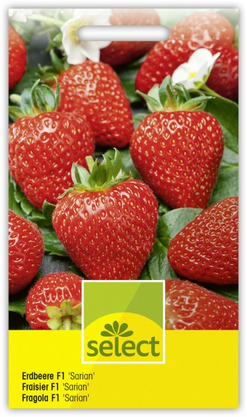 Erdbeere F1 'Sarian' - Fragaria ananassa Hybrida