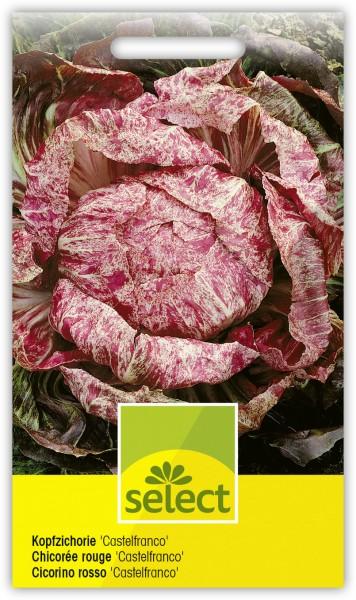 Kopfzichorie 'Castelfranco' - Cichorium intybus