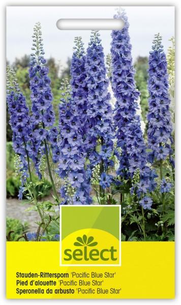 Stauden-Rittersporn 'Pacific Blue Star' - Delphinium-Hybriden