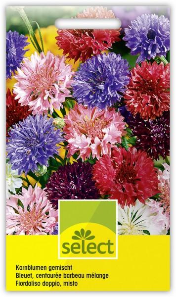 Kornblumen gefüllt, gemischt - Vorderseite