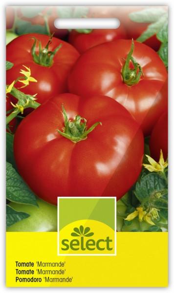 Tomate 'Marmande' - Lycopersicon esculentum