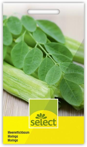 Meerrettichbaum - Moringa oleifera