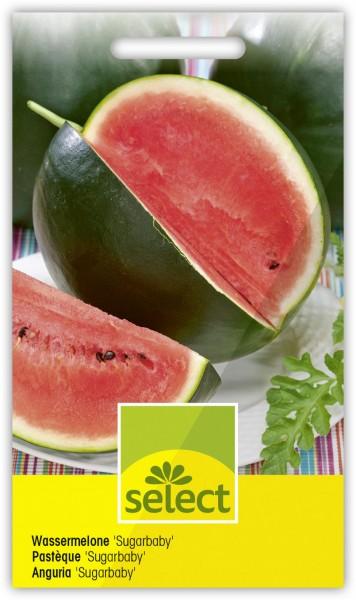 Wassermelone 'Sugarbaby' - Vorderseite