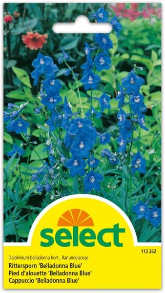 Rittersporn 'Belladonna Blau'