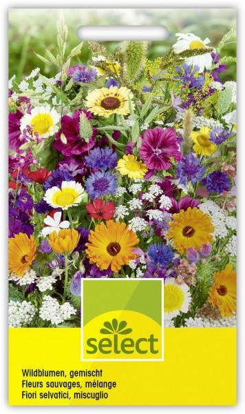 Wildblumen, gemischt - Vorderseite