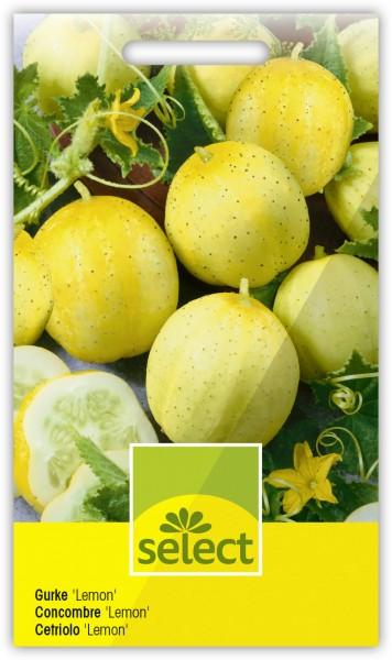 Gurke 'Lemon' - Cucumis sativus L.