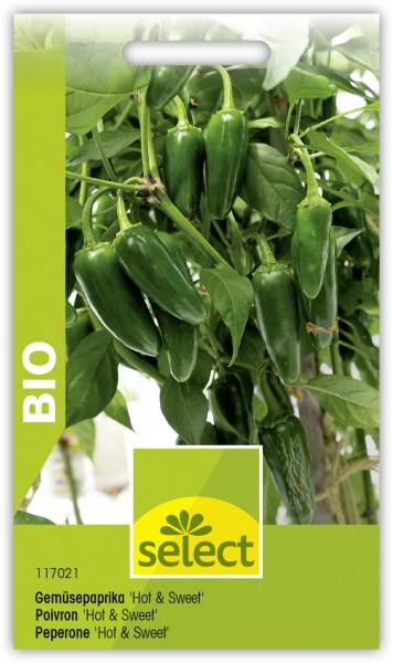 Bio Gemüsepaprika 'Hot and Sweet'