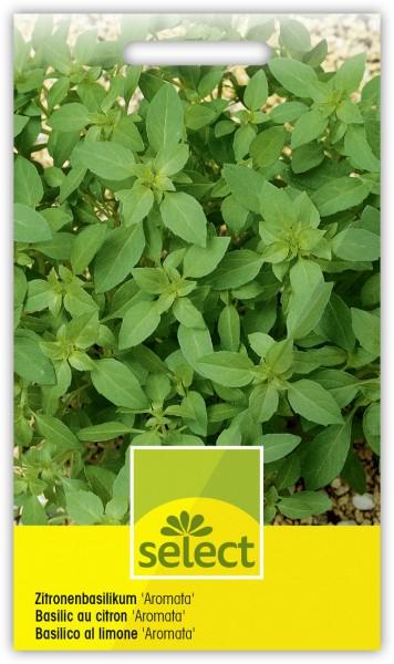 Zitronenbasilikum 'Aromata' - Ocimum basilicum