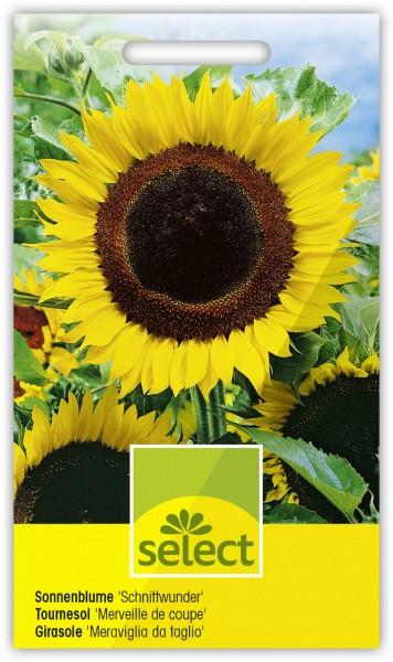 Sonnenblume 'Schnittwunder' - Vorderseite