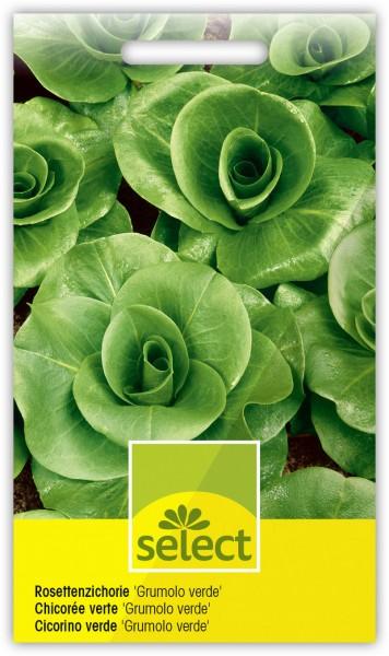 Rosettenzichorie 'Grumolo verde' - Vorderseite