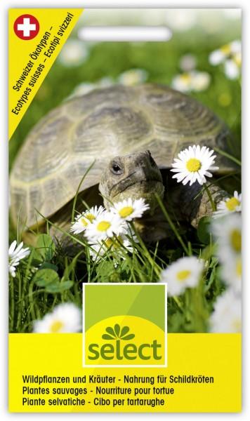 Wildpflanzen und Kräuter für Schildkröten - Vorderseite