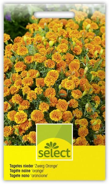 Niedere Sammetblume 'Zwerg Orange', gefüllt - Vorderseite