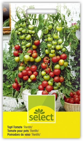 Topf-Tomate 'Rentita' - Lycopersicon esculentum