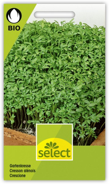 Gartenkresse - Lepidium sativum L.
