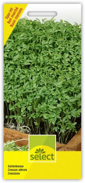Gartenkresse - Vorderseite
