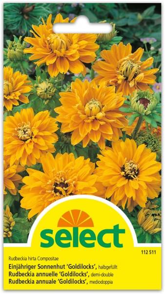Rudbeckia annuelle 'Goldilocks'