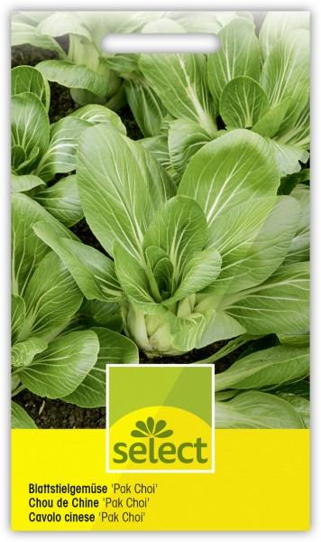 Blattstielgemüse 'Pak Choi' - Brassica rapa var. Chinensis