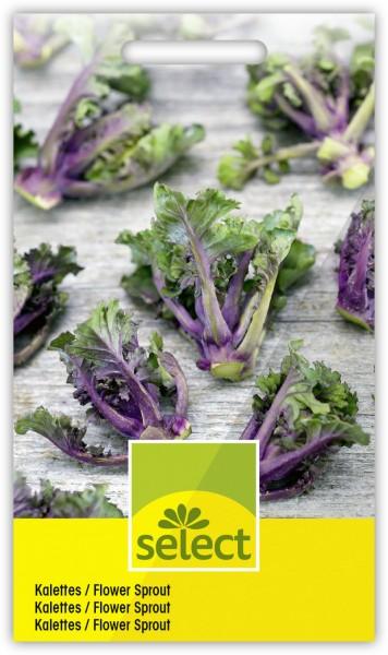 Kalettes / Flower Sprout - Brassica oleracea L.