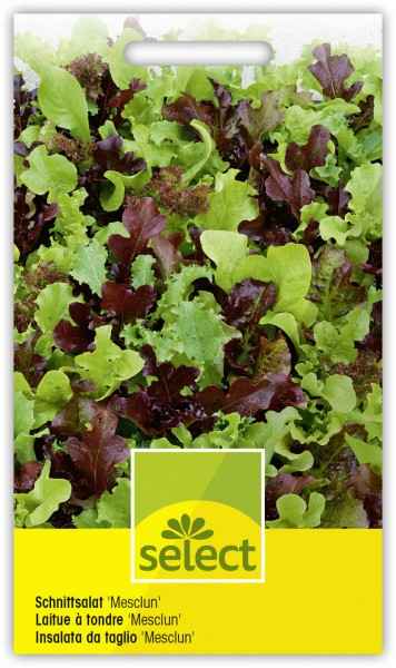 Schnittsalat 'Mesclun ' Salatmischung - Vorderseite
