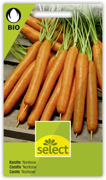 Karotte 'Nantaise' - Daucus carota