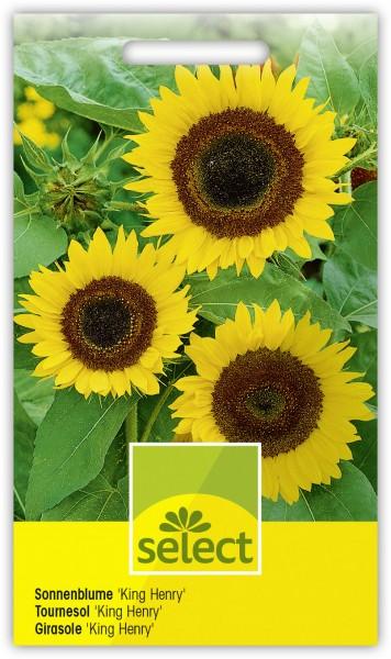 Sonnenblume 'King Henry' - Vorderseite