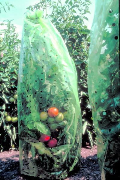 Tomatenreifehauben
