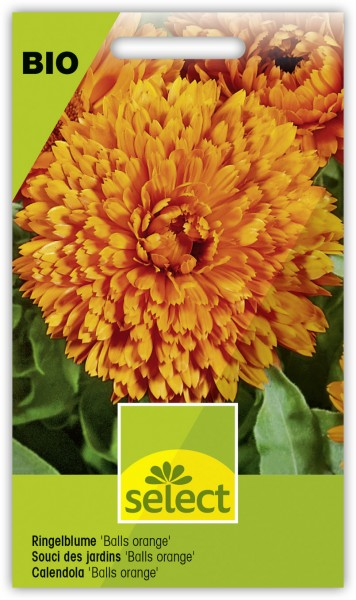 Ringelblume 'Balls orange' - Calendula officinalis