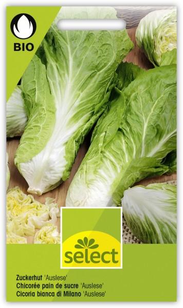 Zuckerhut 'Auslese' - Cichorium intybus L. var. foliosum Hegi