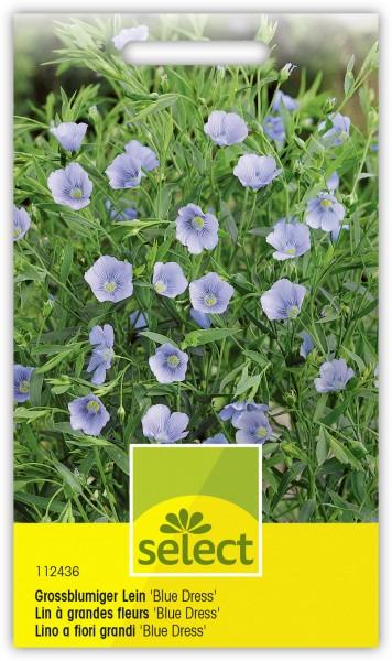 Lin à grandes fleurs 'Blue Dress'