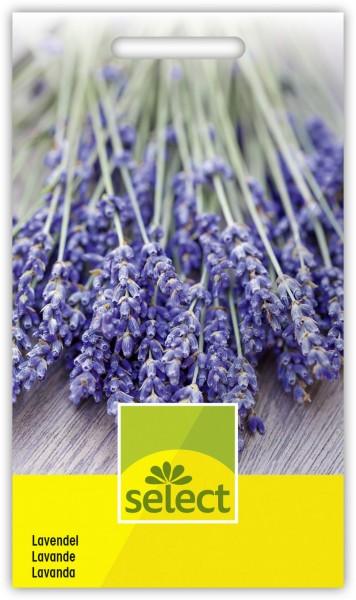 Lavendel - Vorderseite