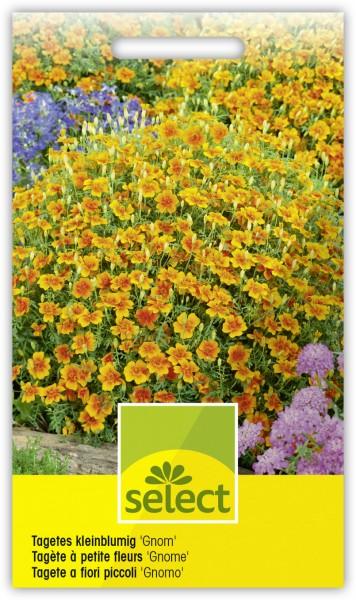 Tagetes kleinblumig 'Gnom' - Tagetes tenuifolia