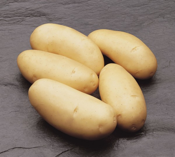 Plants de pommes-de-terre Annabelle 2.5kg