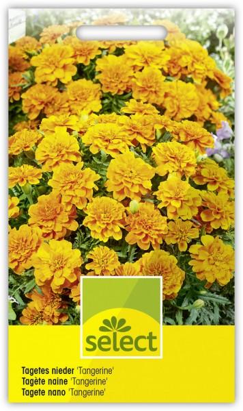 Niedere Sammetblume 'Tangerine', gefüllt, orangegelb - Vorderseite