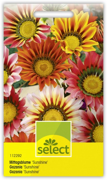 Mittagsblume 'Sunshine', Mischung