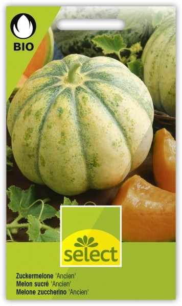 Zuckermelone 'Ancien' - Cucumis melo
