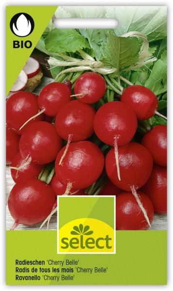 Bio Radieschen 'Cherry Belle' - Vorderseite