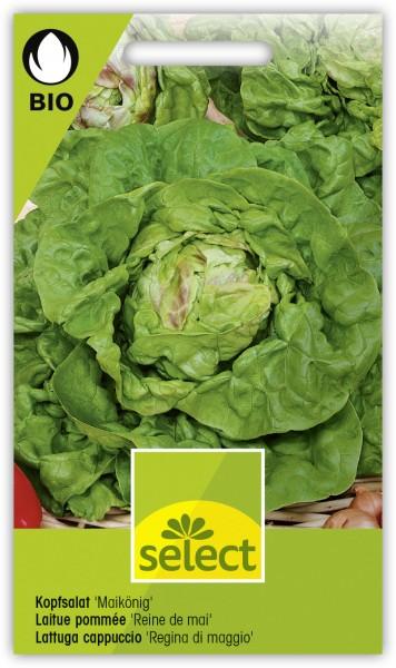 Kopfsalat 'Maikönig' - Lactuca sativa var. capitata