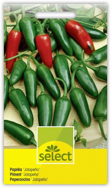 Paprika 'Jalapeño' - Vorderseite
