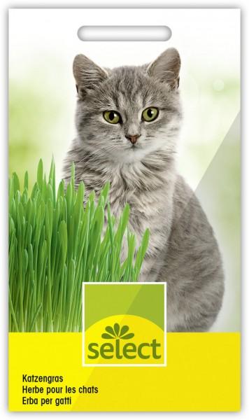 Katzengras - Vorderseite