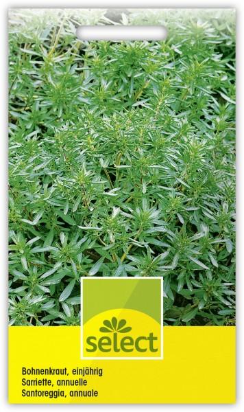 Bohnenkraut, einjährig - Satureja hortensis