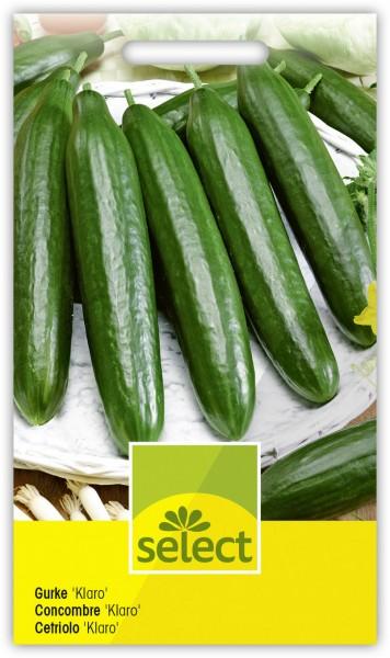 Salatgurke 'Klaro' - Vorderseite