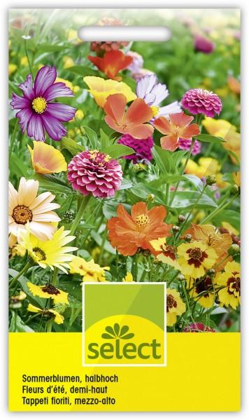 Sommerblumen, halbhohe Mischung - Vorderseite