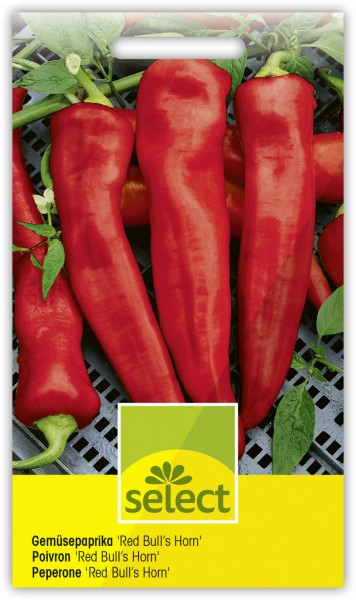 Gemüsepaprika 'Red Bull's Horn' - Capsicum annuum