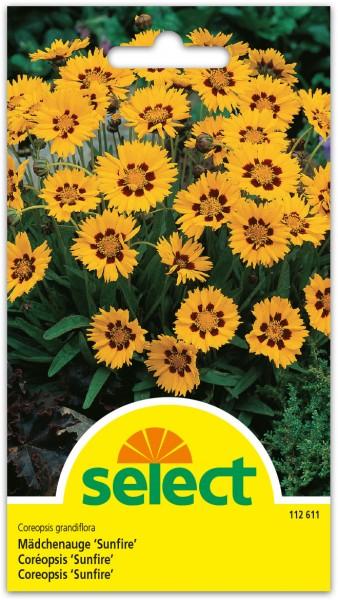 Coréopsis 'Sunfire'