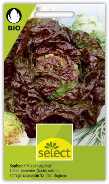 Kopfsalat 'Vierjahreszeiten' - Lactuca sativa var. capitata