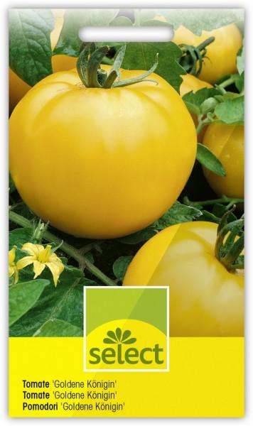 Tomate 'Goldene Königin' - Vorderseite