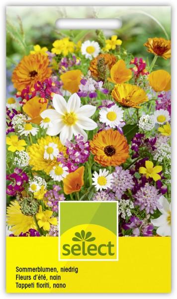 Sommerblumen, niedrige Mischung - Vorderseite