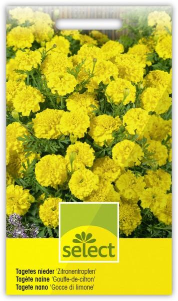 Niedere Sammetblume 'Zitronentropfen', gefüllt - Vorderseite