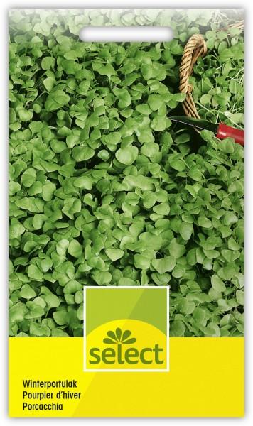 Winterportulak - Montia perfoliata